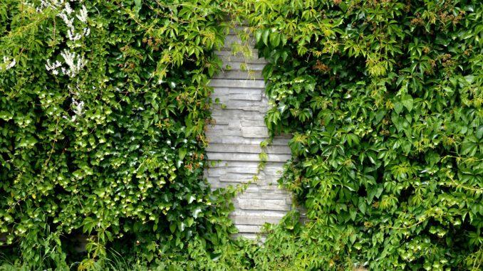 L rmschutzwand selber bauen anleitung - Grune wand selber bauen ...