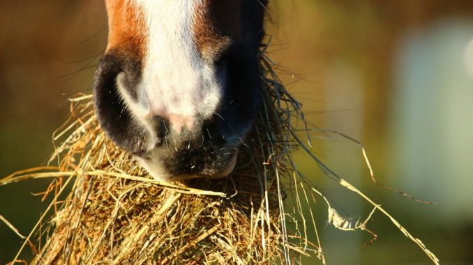 pferd-rundballen-wieviel-kilo