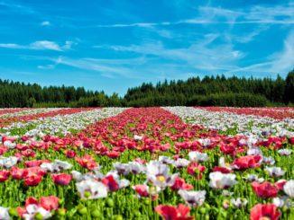 Grundkurs zur Pflanzenbestimmung: PDF