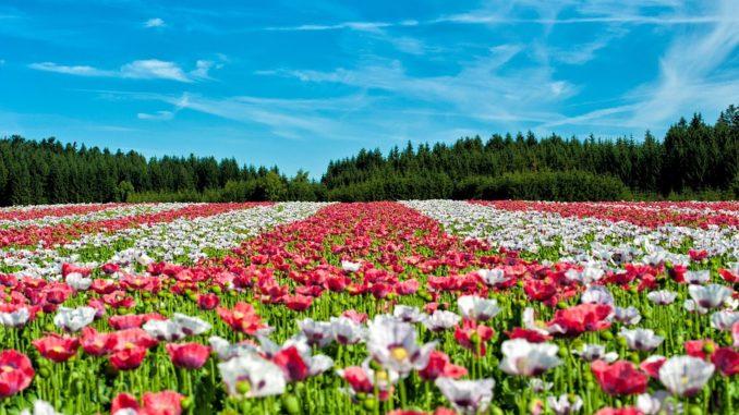 pflanzenbestimmung-grundkurs