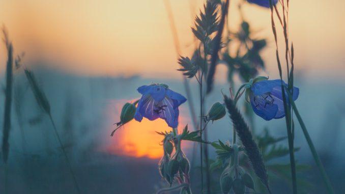 pflanzenfuehrer-unterwegs-online