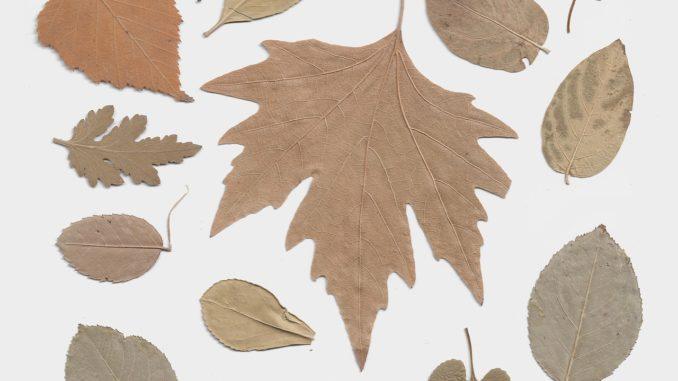 pflanzenpresse-herbarium