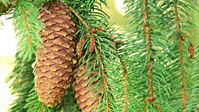 Schnellwachsende Baume Gartenrevue De