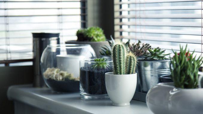 Topfpflanzen Fensterbank