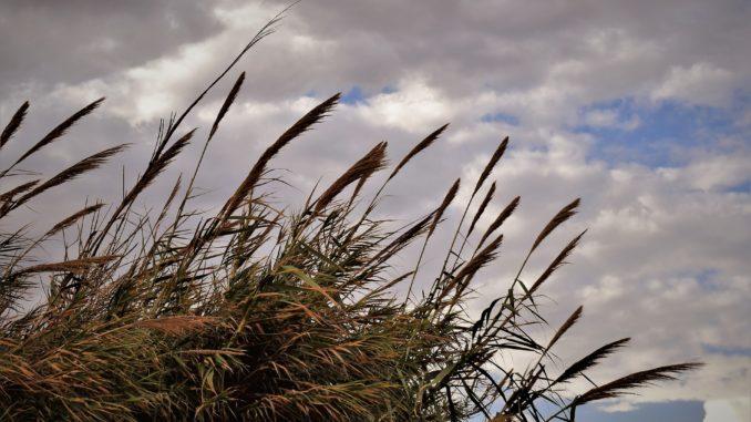 Beliebt Bevorzugt Schilf im Garten – Schneiden, pflegen und entfernen @DM_73