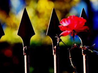 Rosenstab Metall mit einer Rose