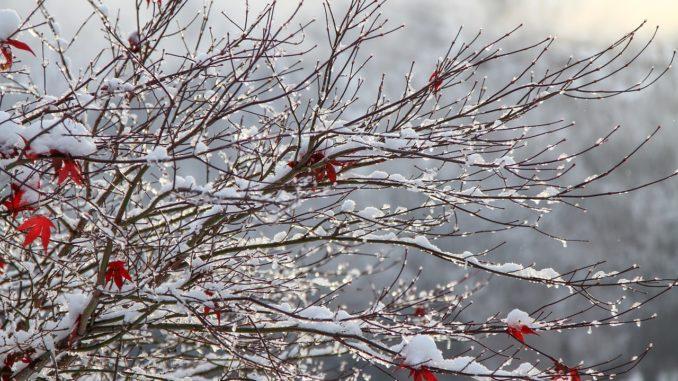 Zelt Für Pflanzen Im Winter : Winterharte pflanzen für balkon und garten gartenrevue