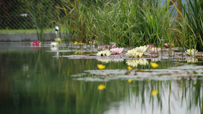 Teichbau Ohne Folie » Gartenrevue.de