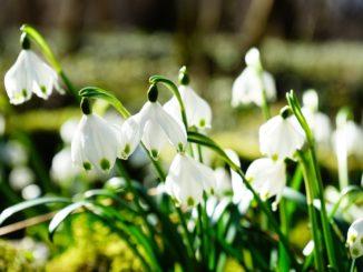 Blume gesucht – Pflanzen richtig erkennen
