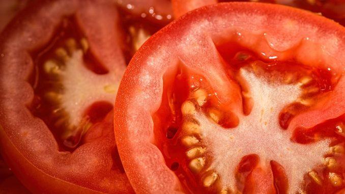 wann-tomaten-pflanzen