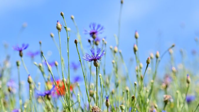 Wildpflanzen nach Farben bestimmen