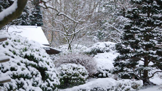 Garten Winter